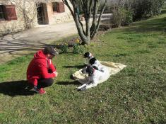 Discuter avec les chiens